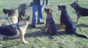 Dog training 172