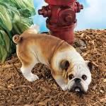 puppy pee