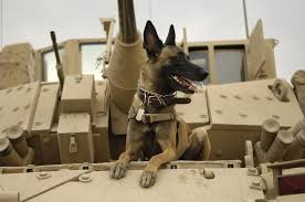 todays military dog